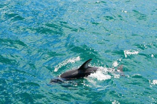 Picton, Nya Zeeland: photo1.jpg