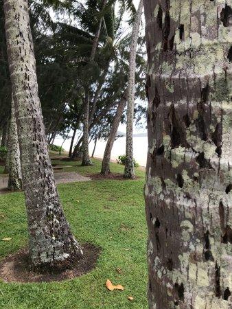 Palm Cove Beach: photo0.jpg