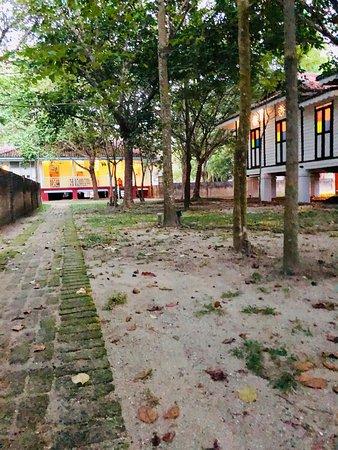 Temple Tree at Bon Ton: photo6.jpg