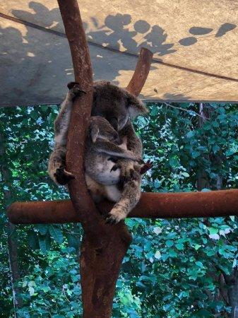 Палм-Коув, Австралия: received_1648663081851882_large.jpg