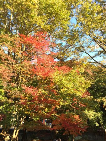 高尾山, 2017/11/11