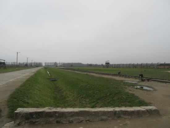 Krakow Tours: Looking into Birkenau