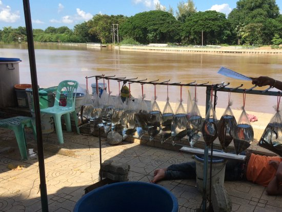 Phichit, Thailand: Stalls selling live animals