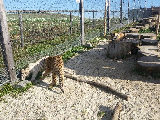 Liptovský Mikuláš, Slovensko: Zoo Kontakt