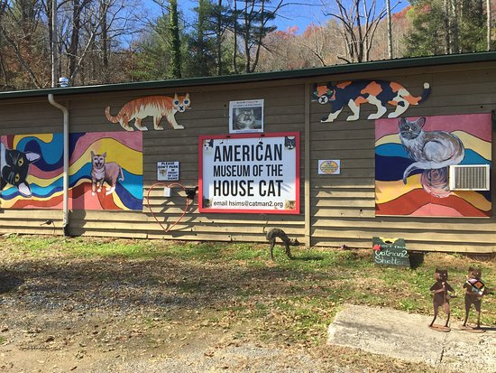 American Museum Of The House Cat Sylva Nc