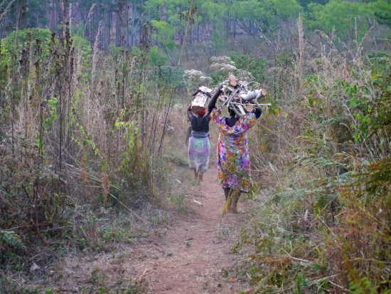 Zomba, Malawi: women carrying wood