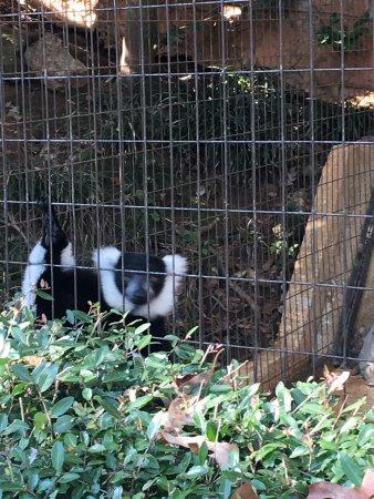 Greenville Zoo: Giraffes, lions, leopards, snakes, monkeys and lemurs...so fun!
