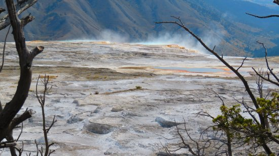 Wapiti, WY: Mammoth Hot Springs