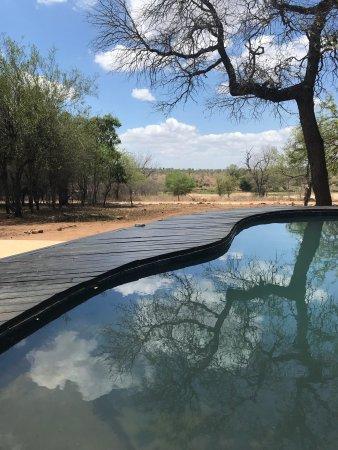 Marloth Park, جنوب أفريقيا: Mvuradona Safari Lodge