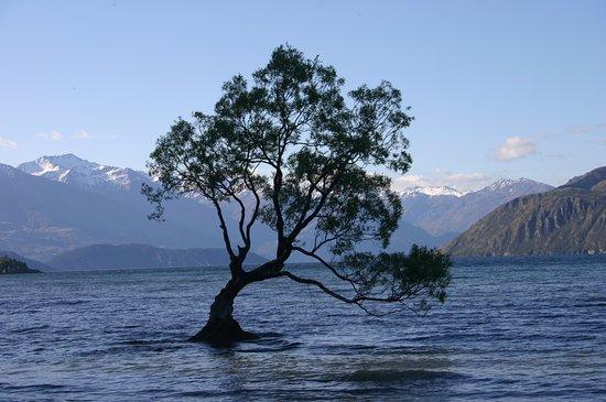 The Moorings: The famous Wanaka tree just a short walk!