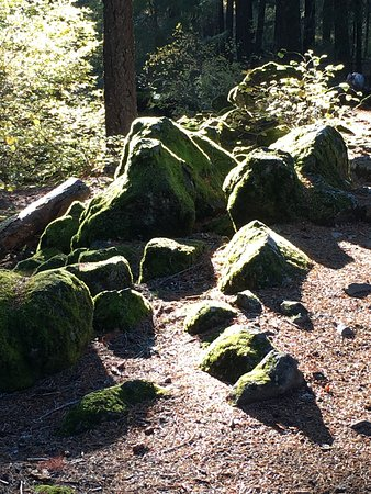 Prospect, Oregón: Moss Near the Rogue River Gorge