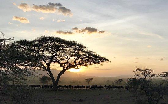 Arusha Region, Tanzania: Sunset in Serengeti. Migration of Wildebeests.