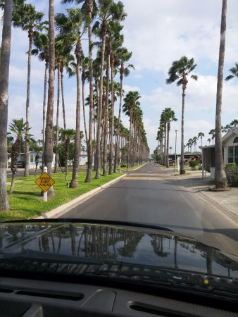 Donna, TX: As you enter the park, street is lined with palm trees which are lit at night.