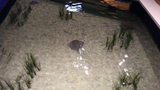 Kure Beach, NC: fort fisher aquarium