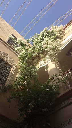 Riad Lorsya: photo4.jpg