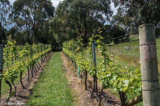 Gisborne, Australia: photo4.jpg