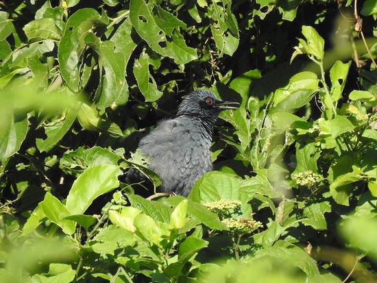 Ecotours de Mèxico: Blue Mockingbird