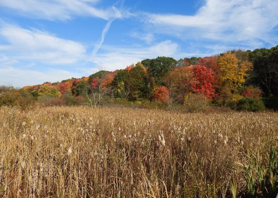 Minute Man National Historical Park: Gorgeous fall foliage!