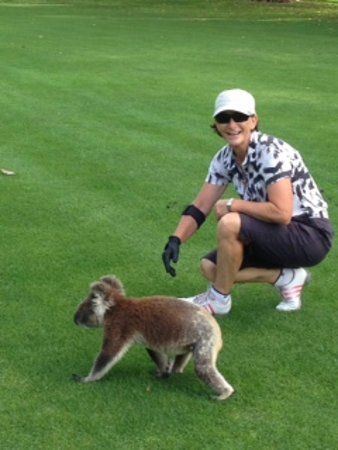 kangaroo encounters guided tours nelson bay