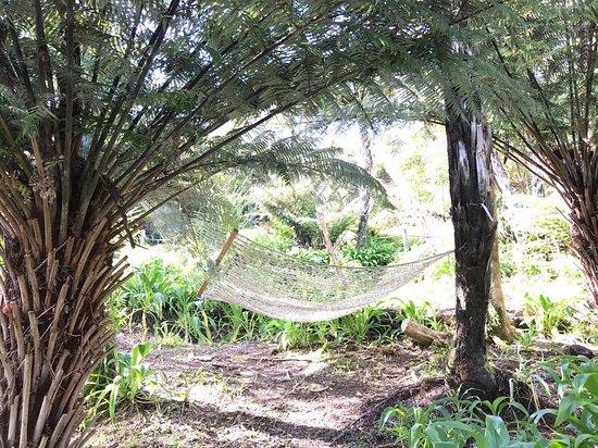 Endeavour Inlet, นิวซีแลนด์: One of our many Hammocks