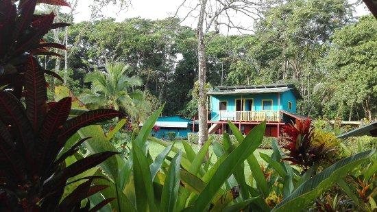 Barra de Pacuare, Costa Rica: IMG_20171107_065529_large.jpg