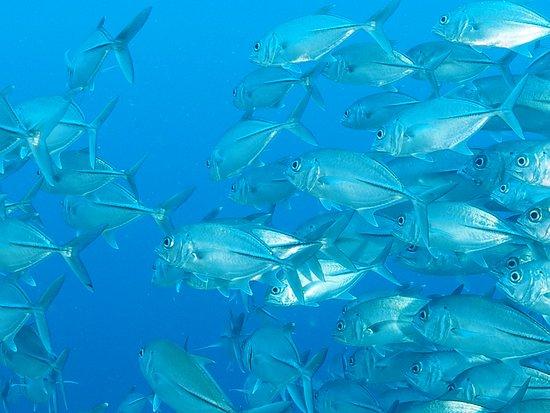 Kri Eco Resort: So much fish
