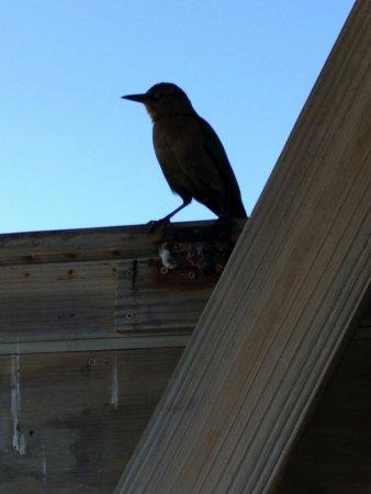 Folly Beach, SC: A bird enjoying the pier