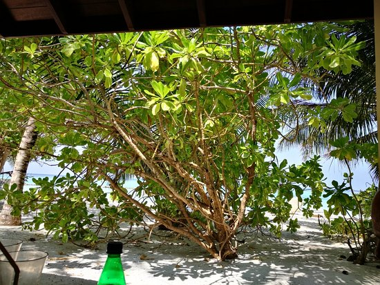 Summer Island Maldives: IMG_20171109_105039_large.jpg