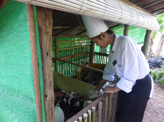 Luang Prabang View Hotel : Hotel Organic Farm