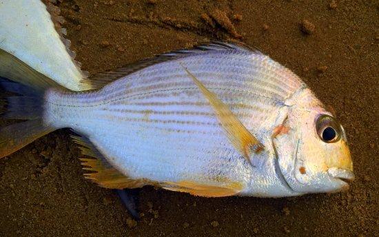 Paradeep, Indien: fish