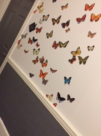 The Kimpton Brice Hotel: My blue butterfly of the day greeted me at my room