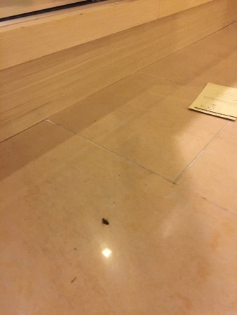 One World Hotel: Cockroaches in the bedroom and embarrassing tennis court conditions