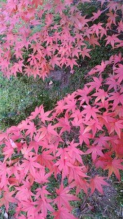 Motsuji Temple: DSC_3461_large.jpg