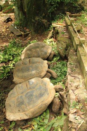 Le Jardin Du Roi Spice Garden: Tortoises