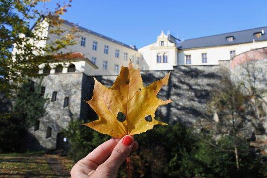 Street Tour by Discover Olomouc