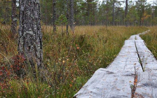 Kauhajoki, Suomi: Lauhanvuoren kansallispuisto, syksyinen pitkospolku