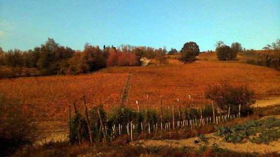 Narzole, Włochy: Un piccolo sguardo sul nostro orto e sulle nostre vigne