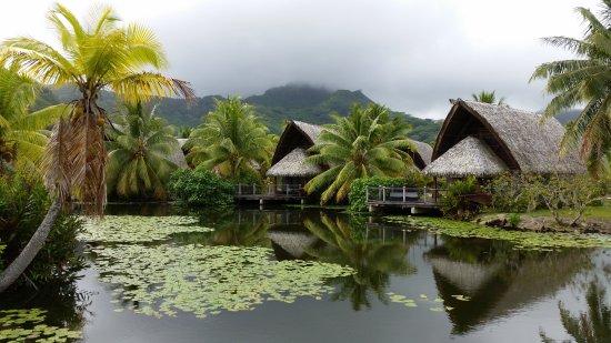 Maitai Lapita Village Huahine Photo