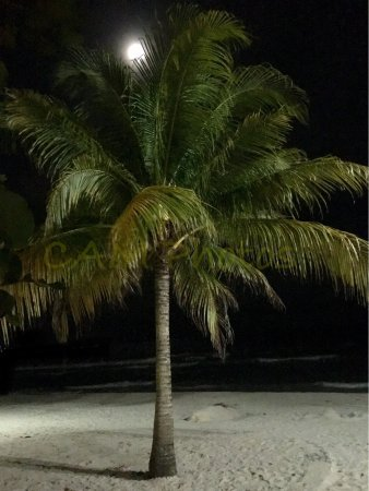 CocoLaPalm Resort: I took these awesome photos one night while hanging out at Cocoa LaPalm Resort Bonfire and Hallo