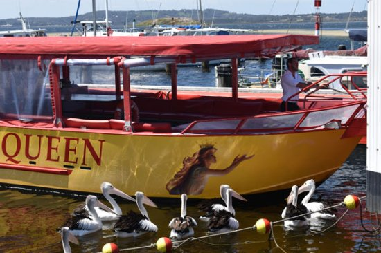 Albany, Australia: Captain Jack and his band of pelicans