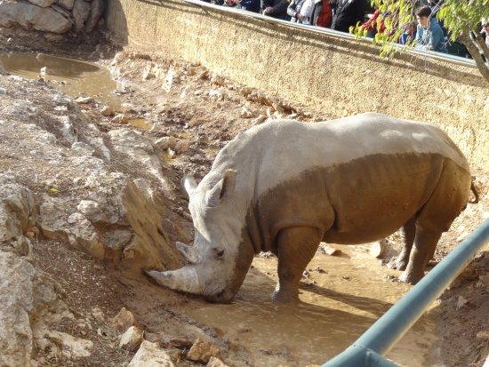 La Barben, Fransa: rhinocéros