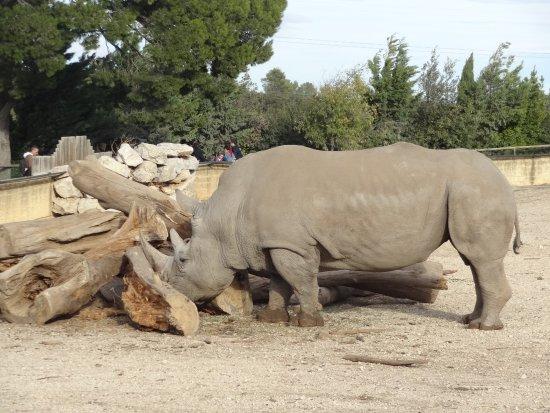 La Barben, Frankrike: rhinocéros