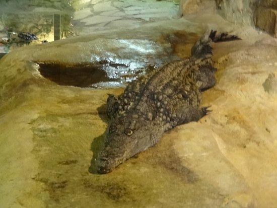La Barben, Frankrike: crocodile