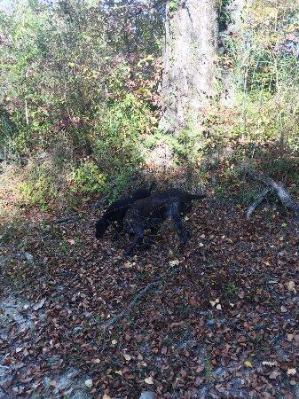 Pietralunga, إيطاليا: Dogs hunting for truffles