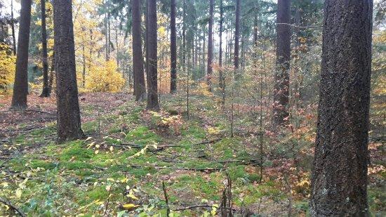 Hockenheim Wald