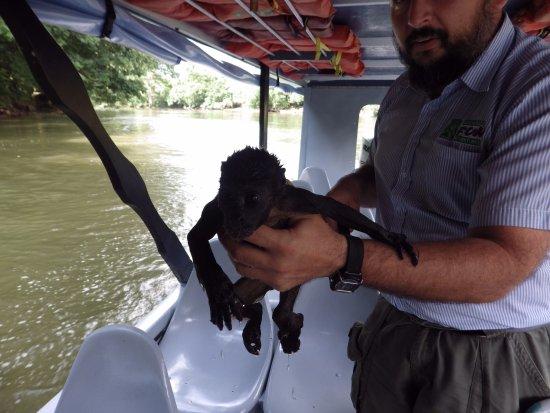 Province of Heredia, Kostaryka: The baby monkey...saved