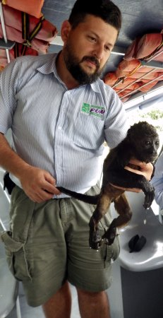 Province of Heredia, Kosta Rika: Baby monkey