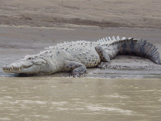 Province of Heredia, Costa Rica: Croc