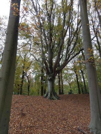 Overveen, Países Bajos: Elswout wandel-park