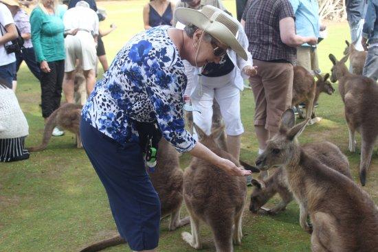 Taranna, Австралия: feeding animals